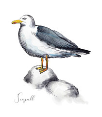 Seagull stands on stones isolated on white background. Watercolor hand drawn illustration