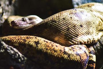 Ominous Snake