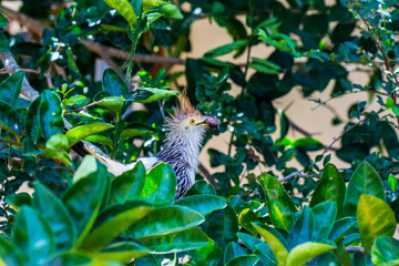 Fauna e Flora MT