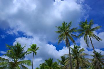 Palm trees and blue sky.