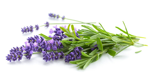 Tuinposter Lavendel Lavender bunch on a white