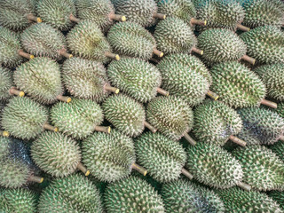 Durian cut from the beginning to sell will be stacked to save space on the back of the pickup truck.