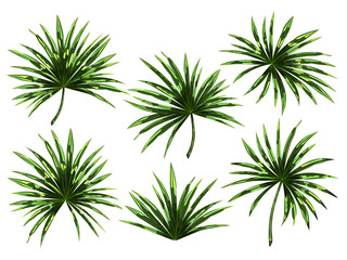 Set of tropical palm leaves isolated on white background.