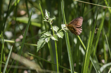 moth of the ephestia type, in a park surrounded by plants.