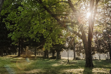 Fairytale spring morning at gorgeous city garden at Varna, Bulgaria. Sun shines through the leaves and highlight the grass on the foregeround.