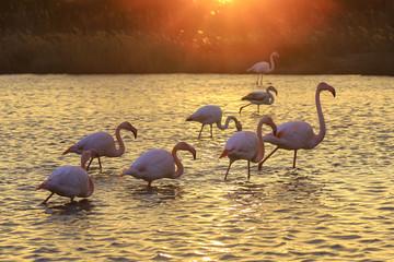 Stores à enrouleur Flamingo Le flamant