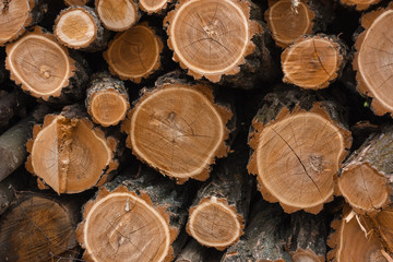 wood, tree, log, timber, firewood, logs, cut, stack, pile, nature, woodpile, lumber, texture, forest, trunk, brown, stacked, wooden, trees, forestry, pattern, material, pine, circle, bark
