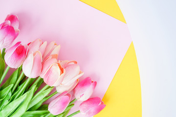 close up on group of pink petal tulip flowers blossom with color background for design concept