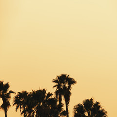 Beautiful sunset of Los Angeles palm trees