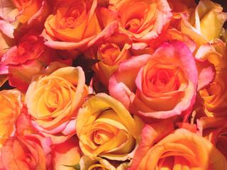 Many roses for lover
