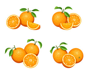 Vector set of orange fruit isolated on a white background.