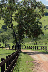 Dirt road flanked by wood fence on countryside of Brazil