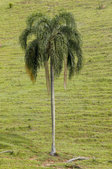 Palm tree with green grass as background