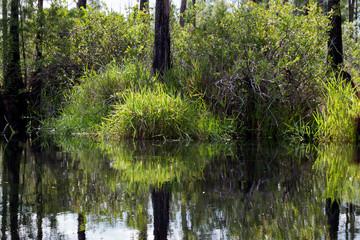 Bright swamp Grasses at Tree Bases