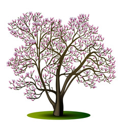 magnolia tree with pink flowers