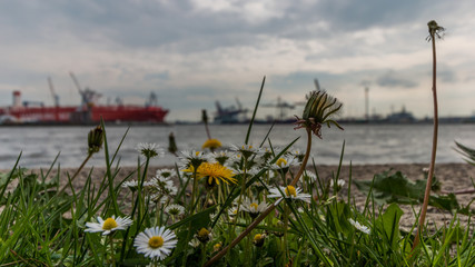 Wilde Blumen am Hafen