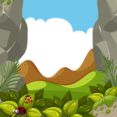 A Forest Scene with Ladybug