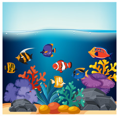 Fish and Corals in Fish Tank