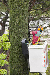 Equiped worker pruning a tree on a crane. Gardening