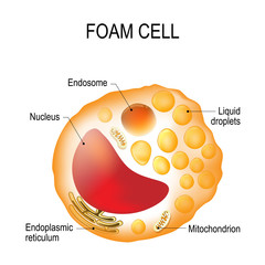 Foam cell. Cell structure