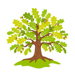 Stylized oak in summer - vector illustration