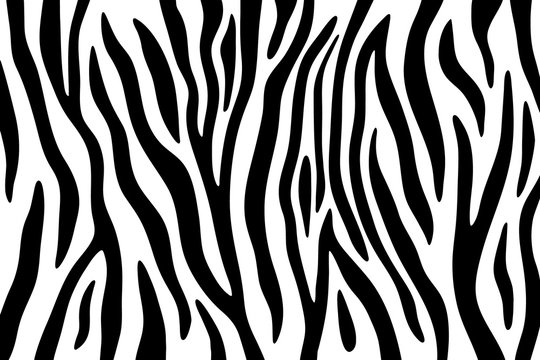 Zebra stripes black and white abstract background.