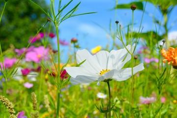 Blumenwiese bunt - Hintergrund Wildblumen