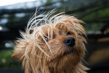 Cute Dog on the wind