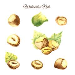 Hand drawn nut watercolor set on white background. Artistic Illustration of hazelnut, peanut, walnut for promotion