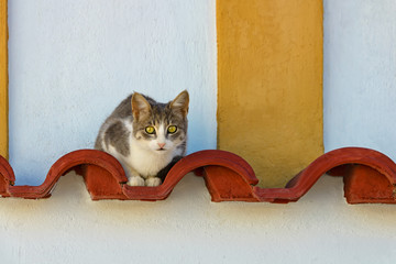 Cat resting on red roofing tiles on a wall, Rhodes, Greece.