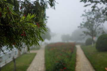 Foggy landscape in Sapa, Vietnam.