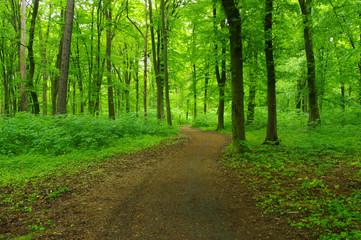 Poster de jardin Foret green forest in spring