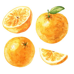 Hand drawn watercolor oranges isolated on white background. Citrus fruits with leaf and cut half. Food illustration.