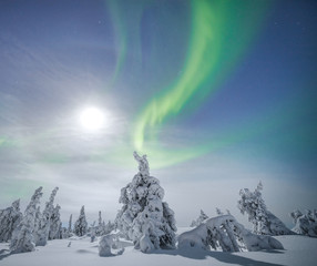 Northern lights over the snowy trees