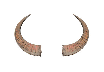 Buffalo horns on white background texture
