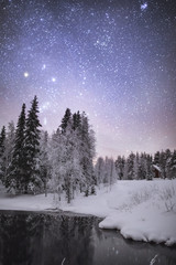 View of forest against starry sky during winter