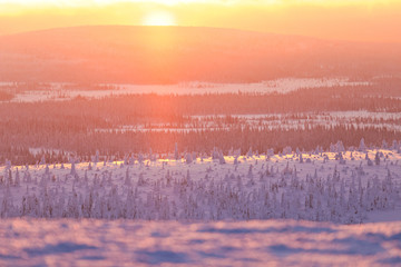 Sunrise over snowy woods