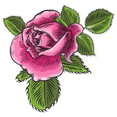 Floral rose flower element with green leaves for bouquet design, garden rose. Wedding invite card illustration design. Vector.