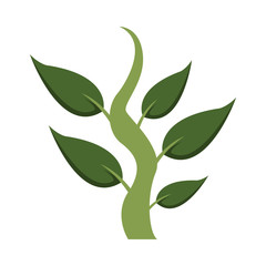 Plant with leaves vector illustration graphic design