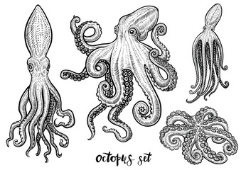 Octopus hand drawn vector illustrations. Black engraving sketch isolated on white.