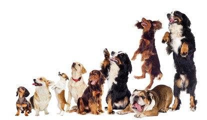 set of dogs looking sideways and upwards
