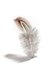 small fluffy feather isolated on white