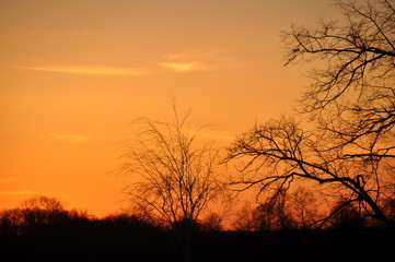 Orange sunset and trees.