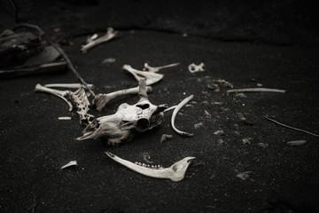 Reindeer skeleton in mine tailings