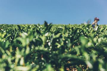 Teeplantage Fairtrade anbau, Bio Gesund aus der Natur Tee Fotoväggar