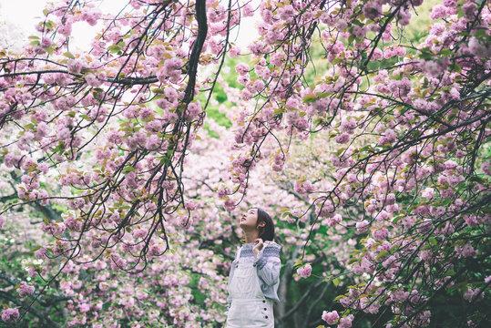 春、八重桜と女の子