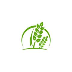 wheat Logo Template vector illustration icon design