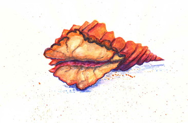 Drawing with watercolor paint: a large horned oceanic shell.