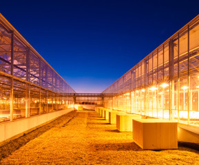 Glowing greenhouses at disk