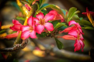 Blüten in Vietnam